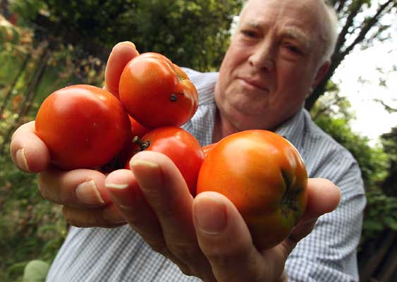 homme tomates